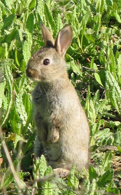 Lapin en images dinosoria - Cuisiner le lapin de garenne ...