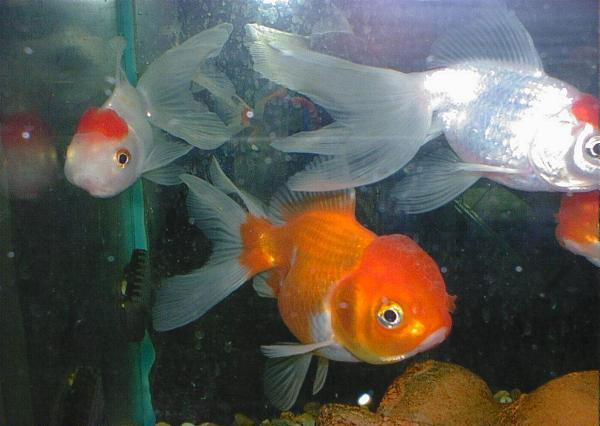 loisir de l aquariophilie الصفحة 4 منتديات تونيزيـا سات